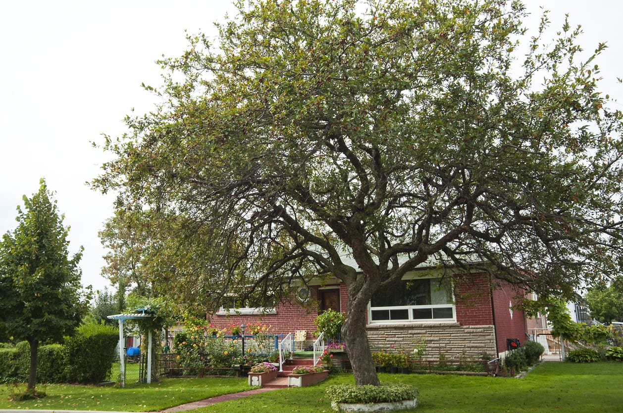What You Need to Know To Prepare Your Trees